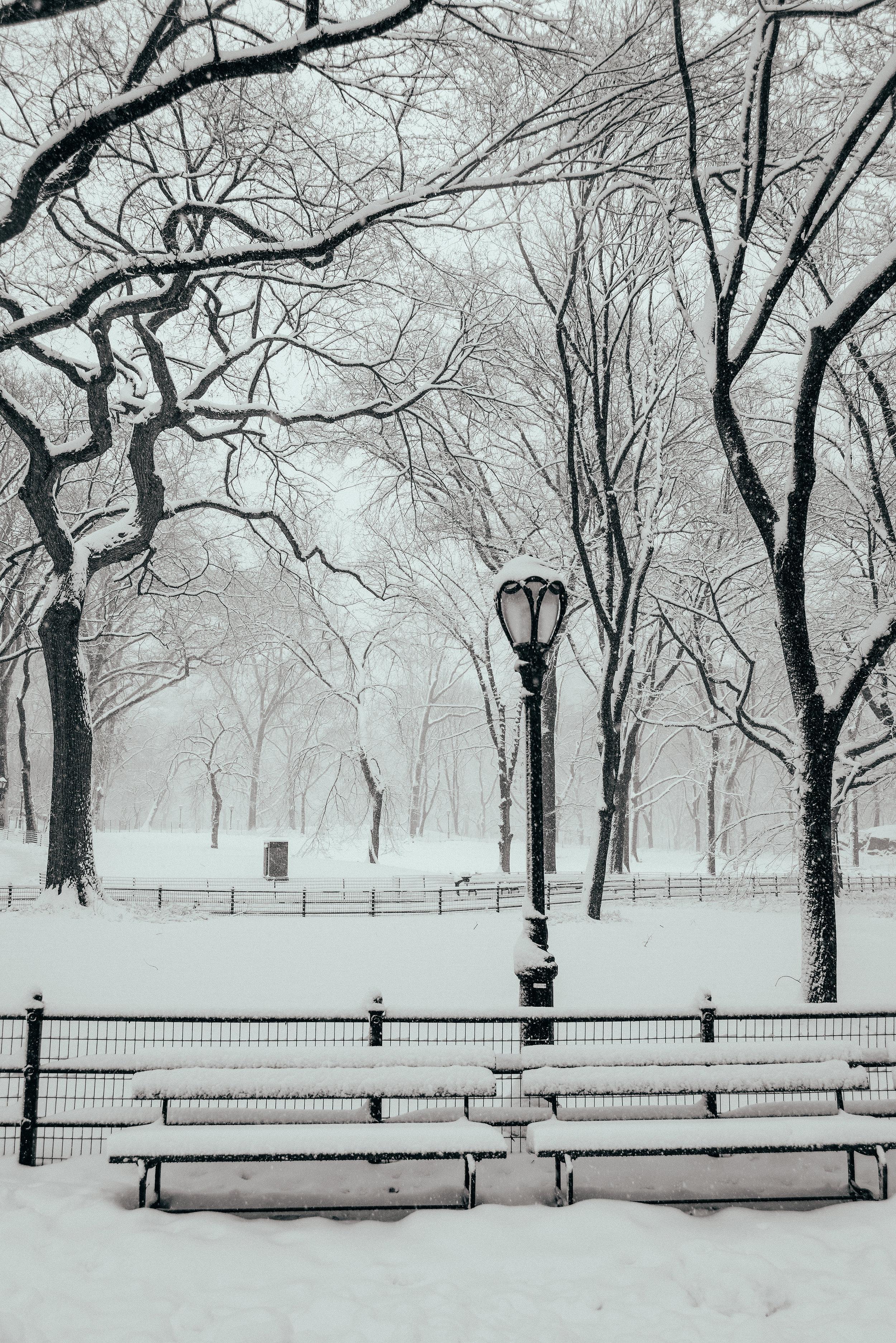 Winter_Storm-11.jpg
