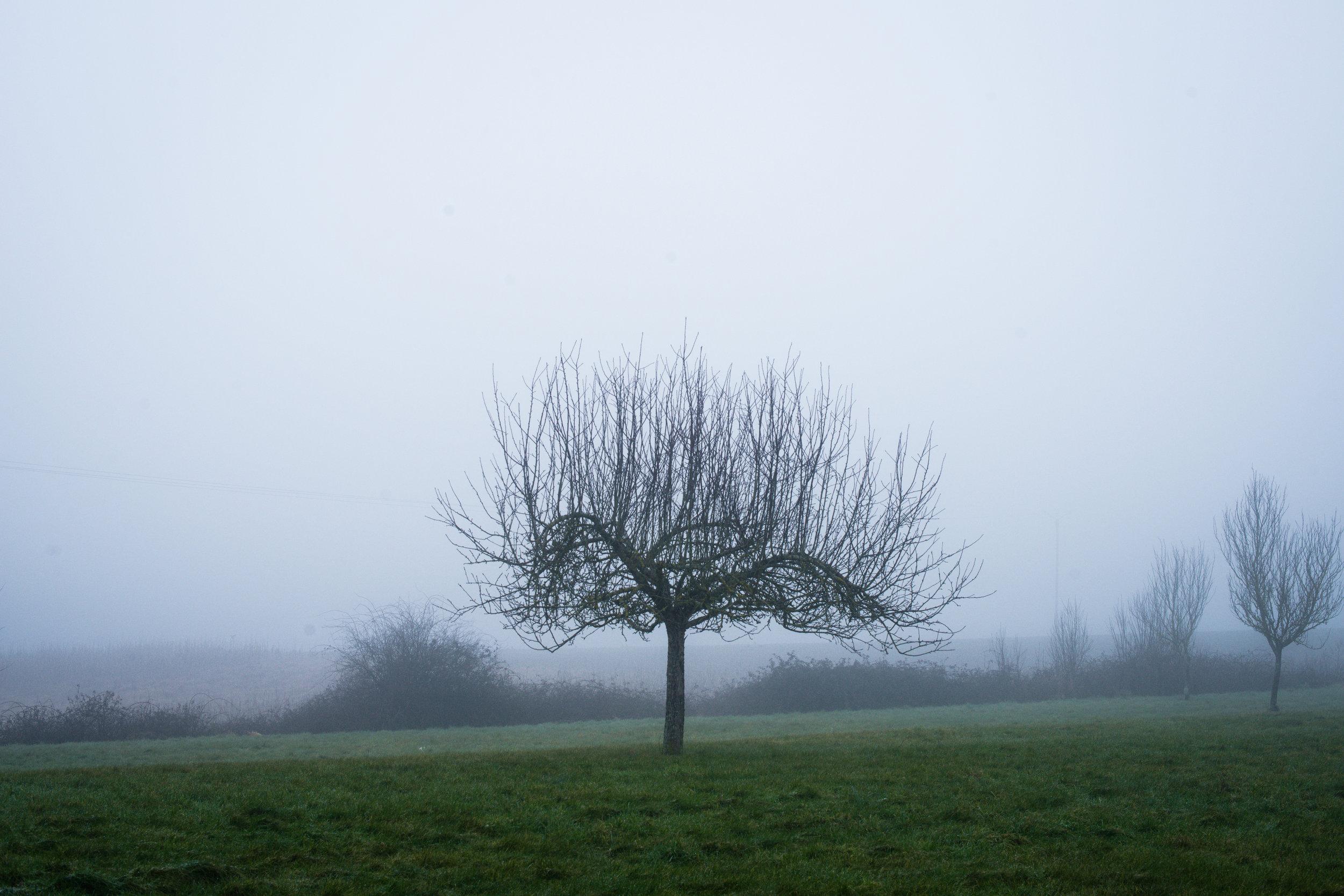 Bontin_Fog_0215-9.jpg