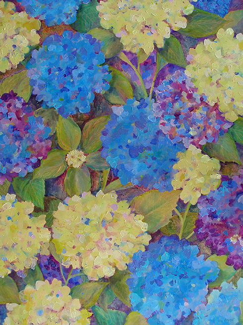 Hydrangeas in Transition
