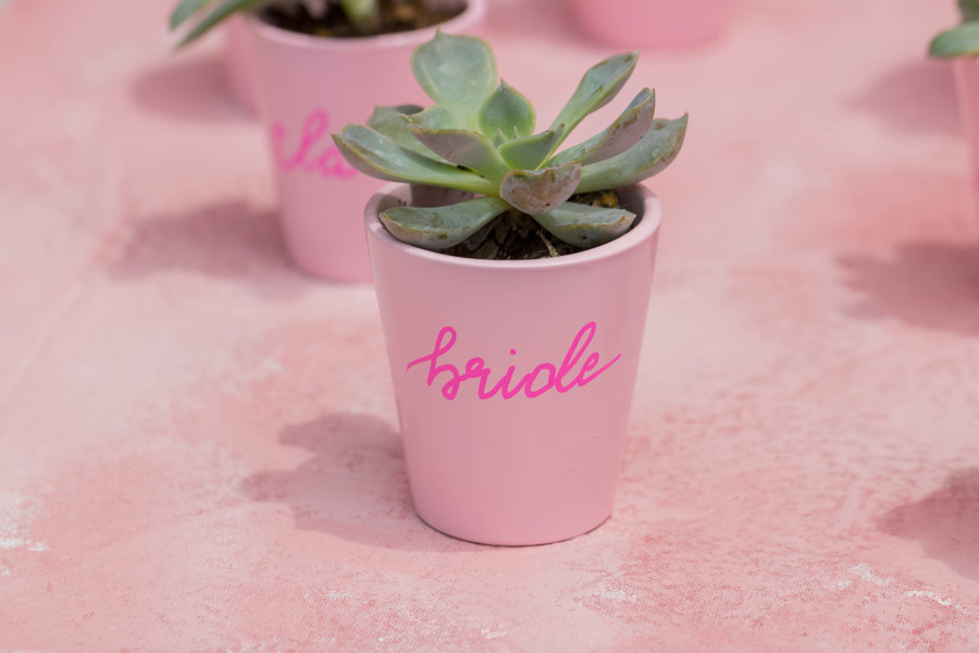 THE PINK CACTI (2).jpg