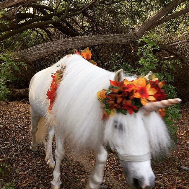 Welcome to my enchanted forest, where I use my magical unicorn powers to grant your special wish.💫🦄🌿🌈💜