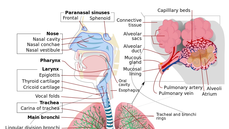 Homeostasis and Immunity -