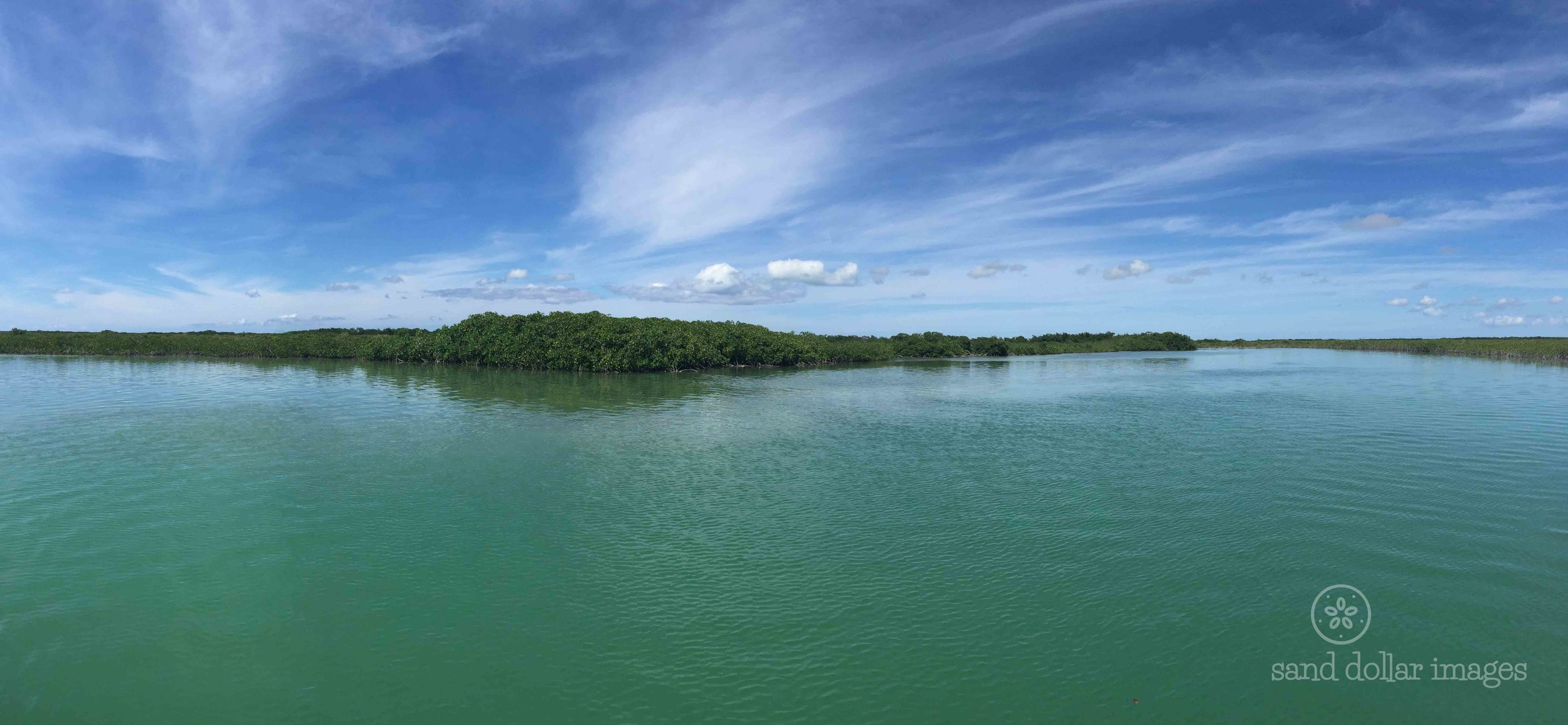 """North Caicos Mangroves (available only in 8"""" x 23.5"""")"""
