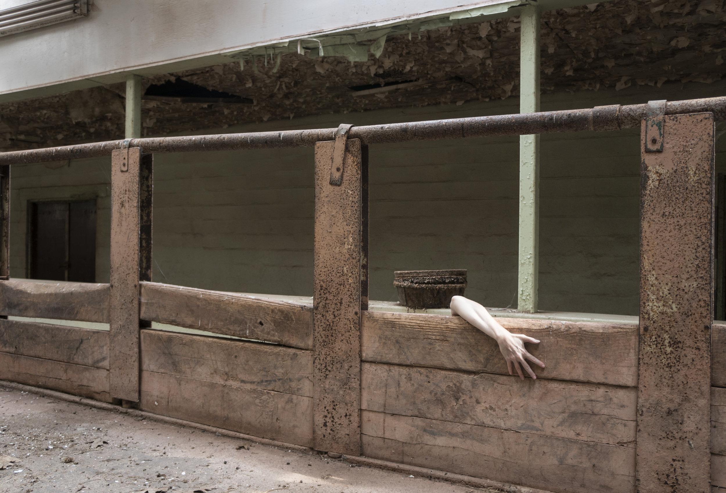 """Rhinoceros House #3, 20"""" x 13"""", $150"""