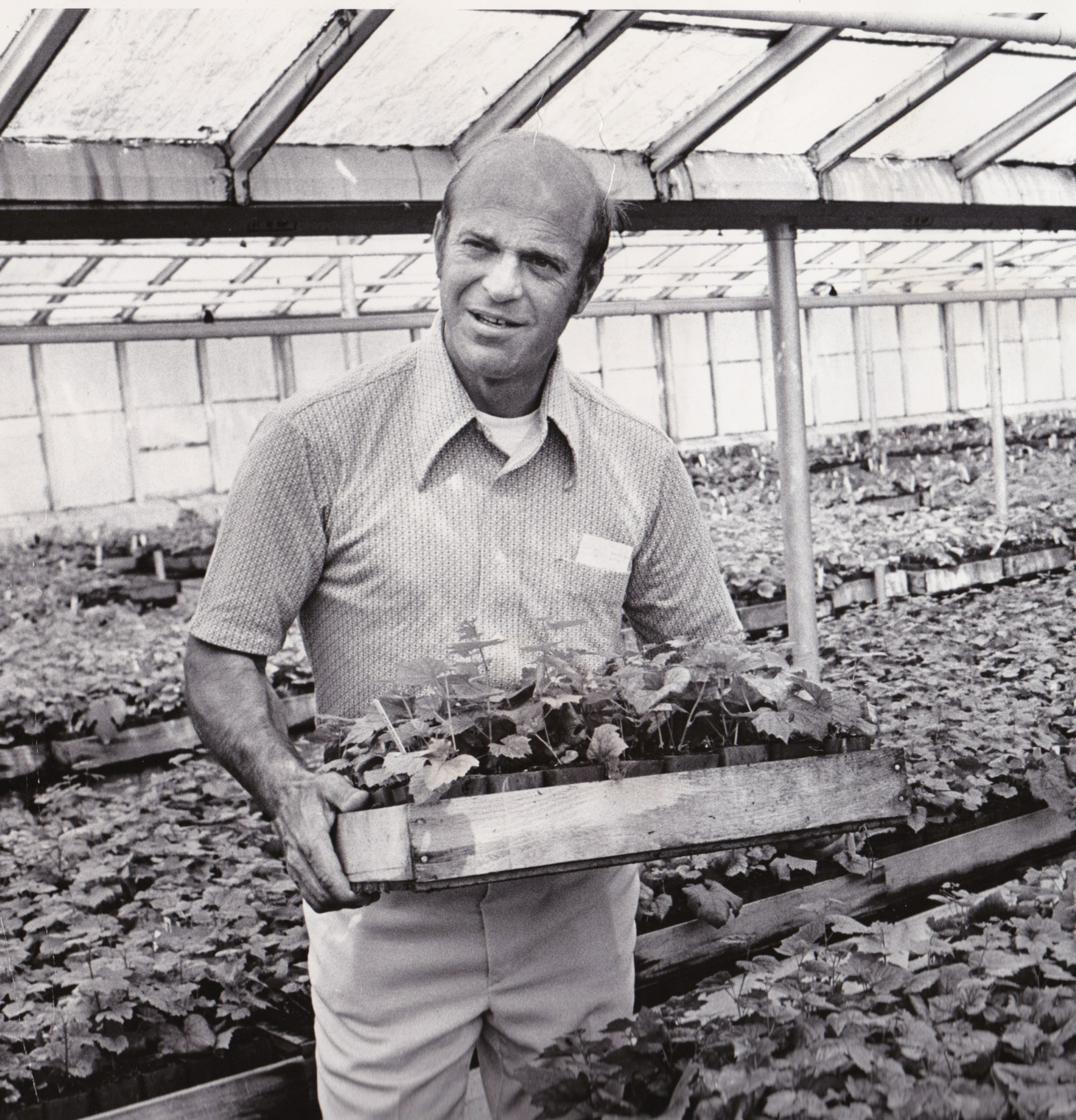 Charles Coury with his nursery vines in Portland, August 13, 1972. He had over 200,000 plants in 1972 and had 1,000,000 by 1973.