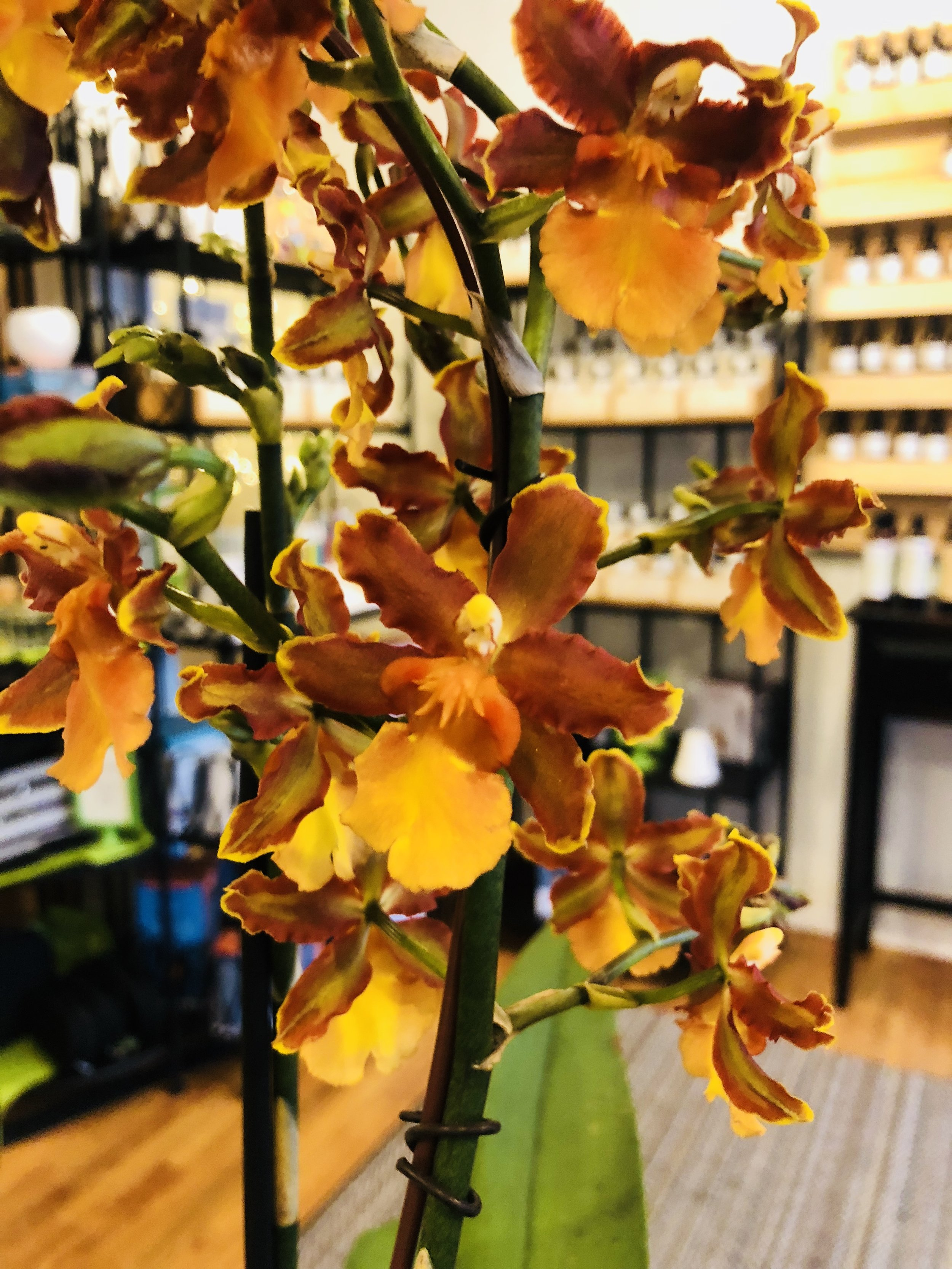 orchidgallery.jpg