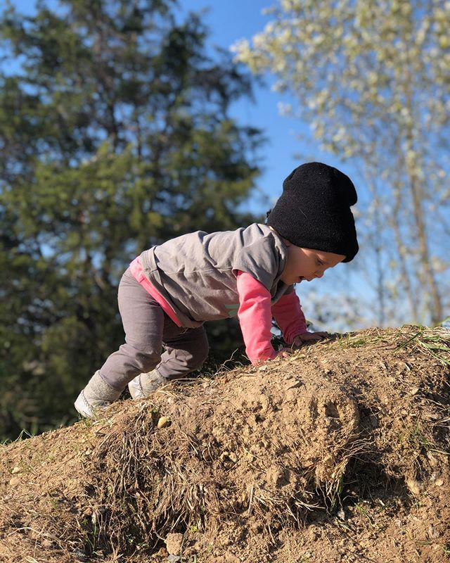 Wiley got to hangout at @stonehousemarketfarm with @j.rolett and family yesterday.  I think he had fun.  Give him a pile of dirt and a farmer and he feels at home.