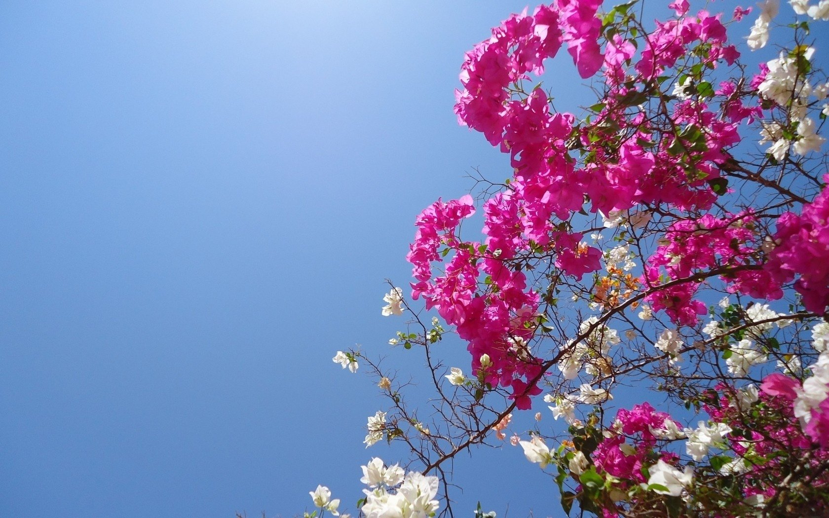 Bruce Phoenix AsksFor Flowers -
