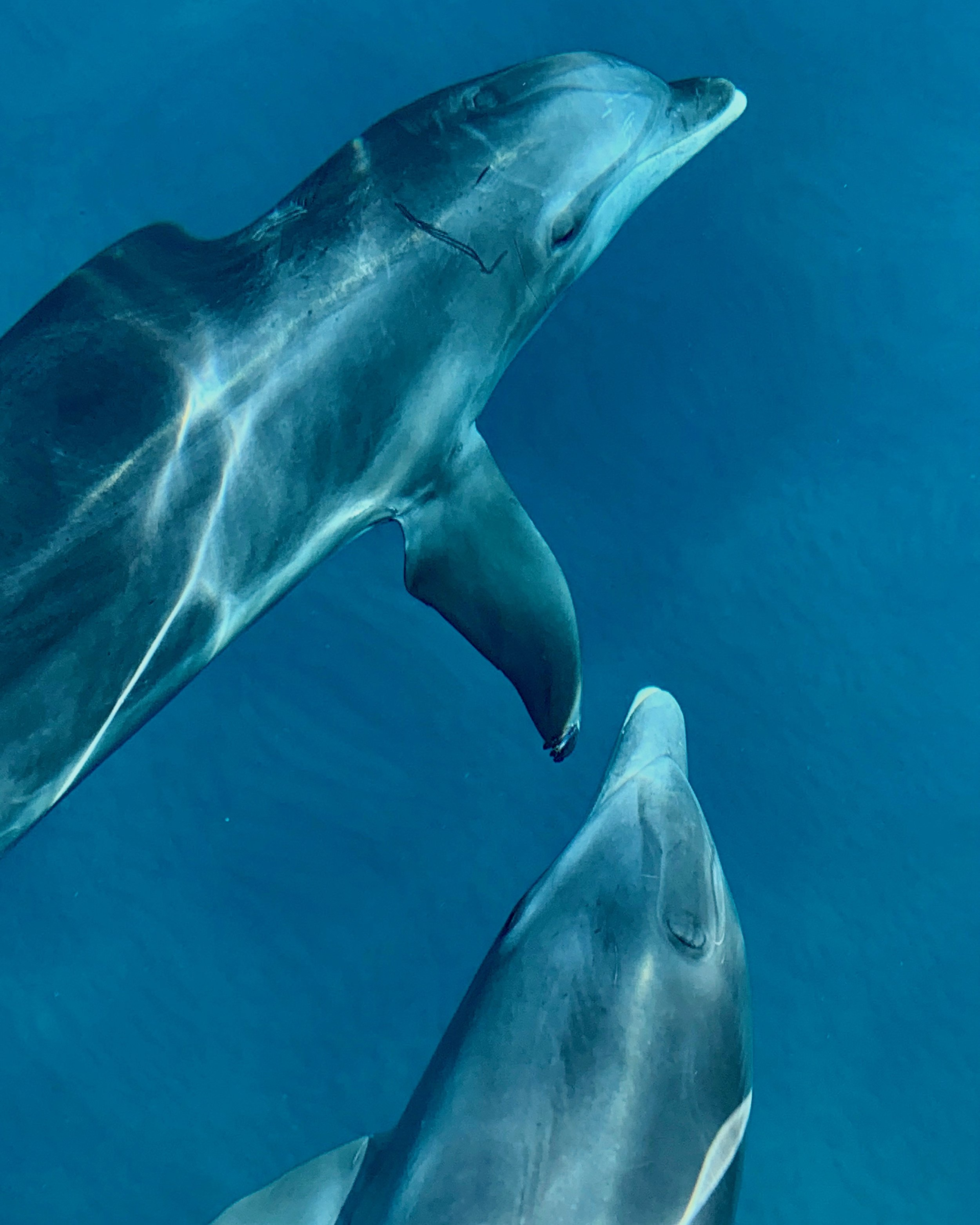 IMG_5020 dolphins off bow 2.jpg