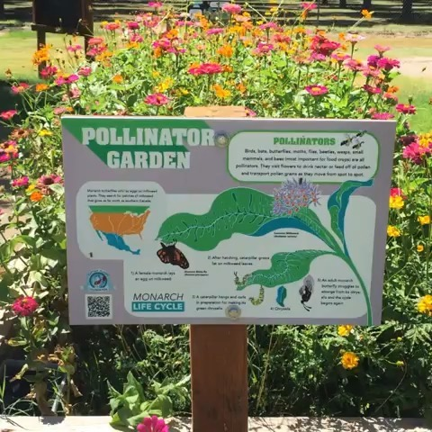 RP: @lasemillafoodcenter  We are excited to showcase an example of how we are #rootedincommunitysw in the Paso del Norte region! One way that we grow our community is by creating habitat for our winged friends and teaching kids to show love for Mother Earth and protect important pollinators. These student have been at summer school learning about the life cycle of butterflies and their teacher says they beg her to go outside every day! We are in the Chihuahuan Desert which is one of the most biodiverse regions in the world but pollinators here face threats from border walls, pesticides, habitat loss, pollution, invasive species, and climate change, among others. We have built 20+ pollinator beds at our school gardens to teach youth to be stewards of the earth. Check out @aymariposafilm to learn more about butterflies and the border wall. They also have some delicious apples thanks to our pollinator friends! How are you rooted in community? @rootedincommunity #RICSW #RIC2019