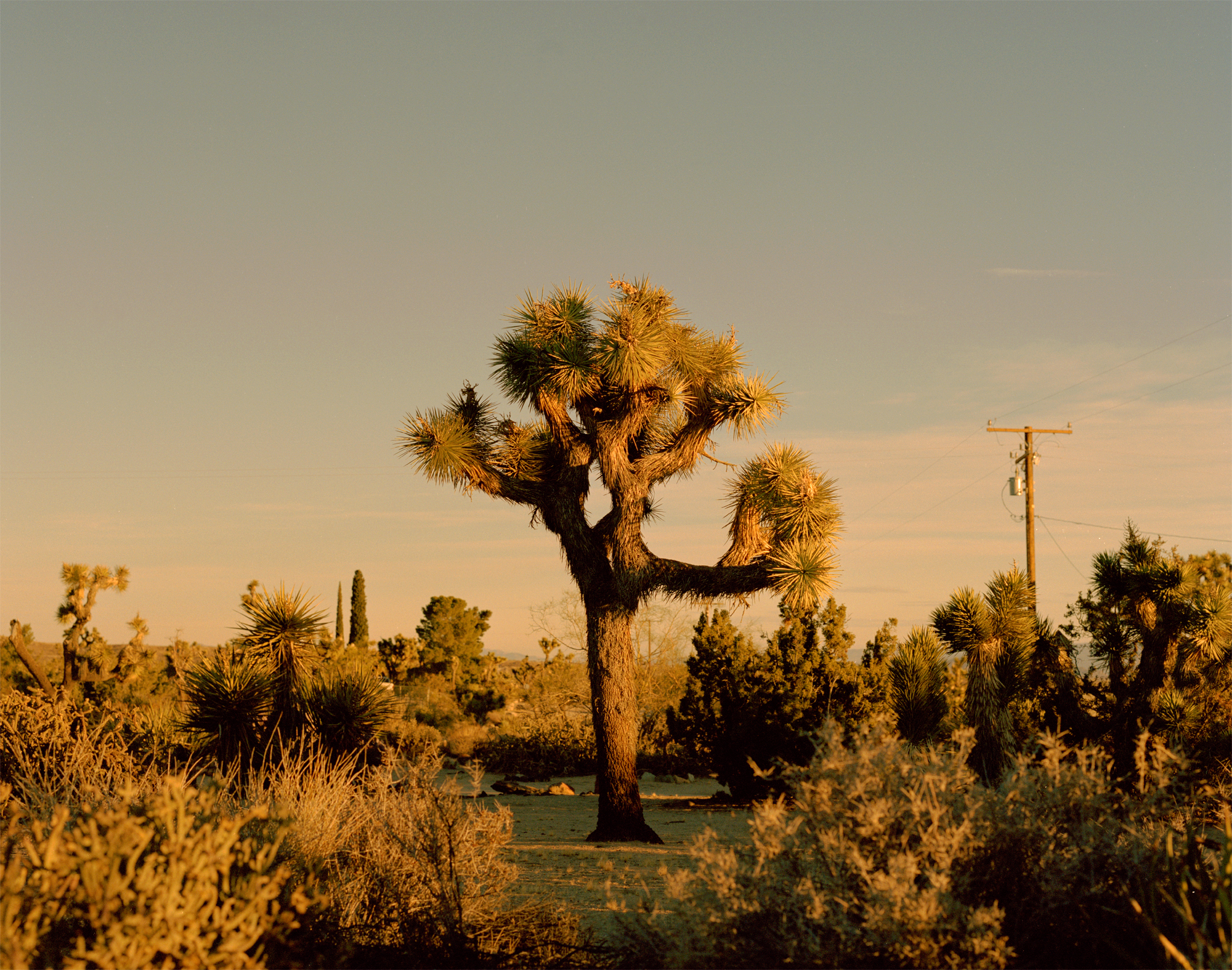 Sam_Wright_Joshua-Tree.jpg