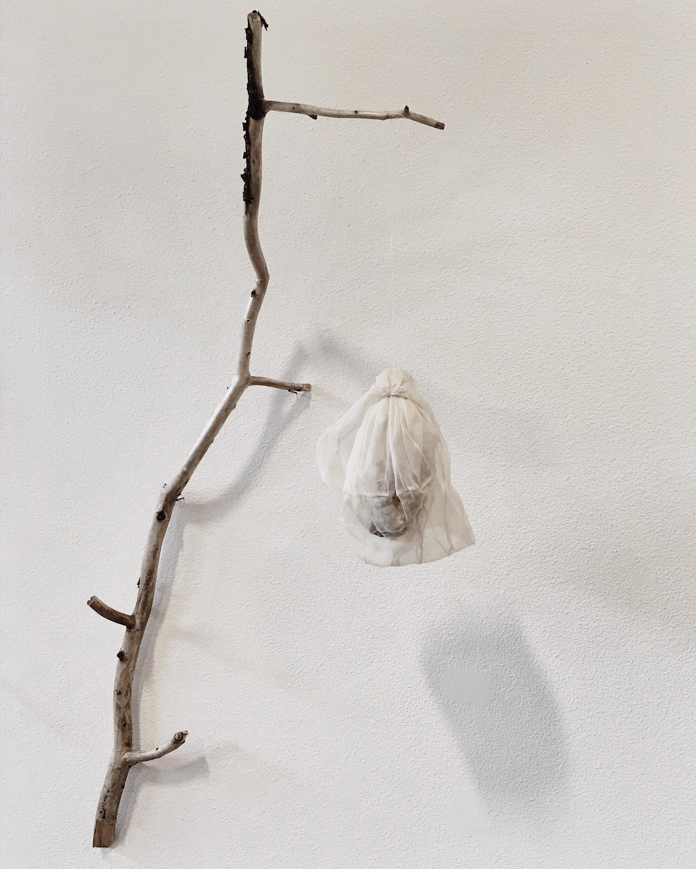 araneae nest  2017
