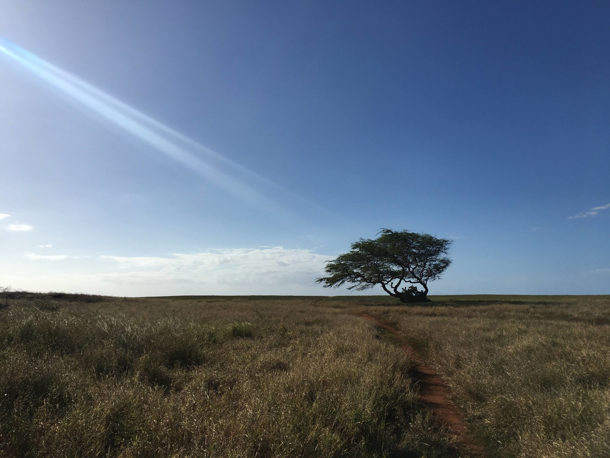 A marker where the path turned.  Photo taken in Molokai (January 2019)