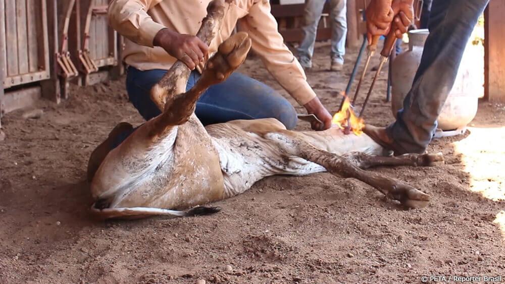 Urge H&M to Stop Selling Animal Skins