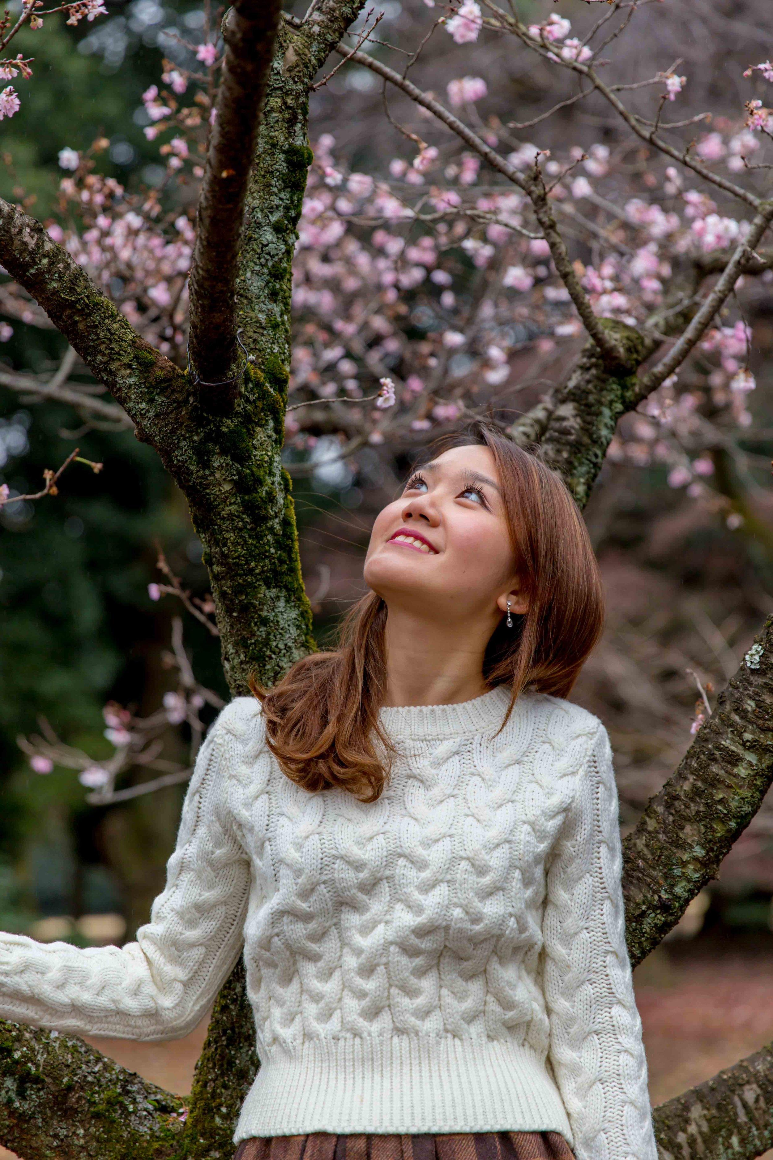 Sakura (cherry blossoms), Shinjuku Gyoen Park, Tokyo