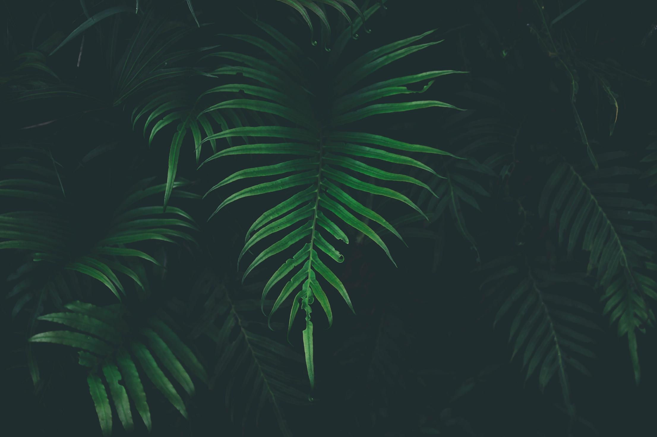LESLIE TULIP: FINDING STRENGTH IN WEAKNESS -