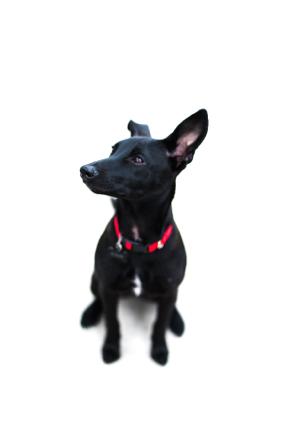 IV Pup by Alaska Yokota @alaska.visuals