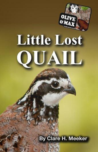 olive-max-little-lost-quail.JPG