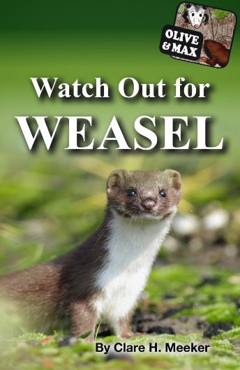 olive-max-watch-out-for-weasel.JPG