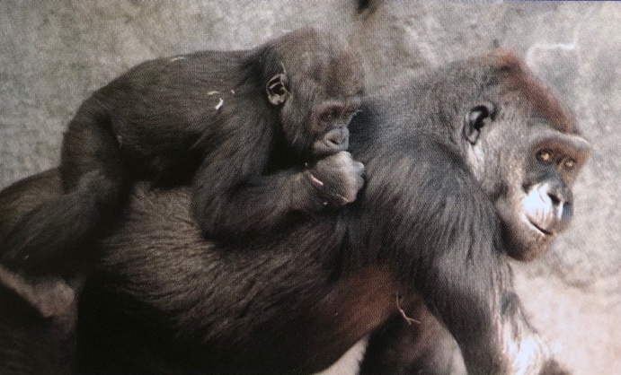 Yola's mother Nadiri as a baby rides on her cousin Alafia's back