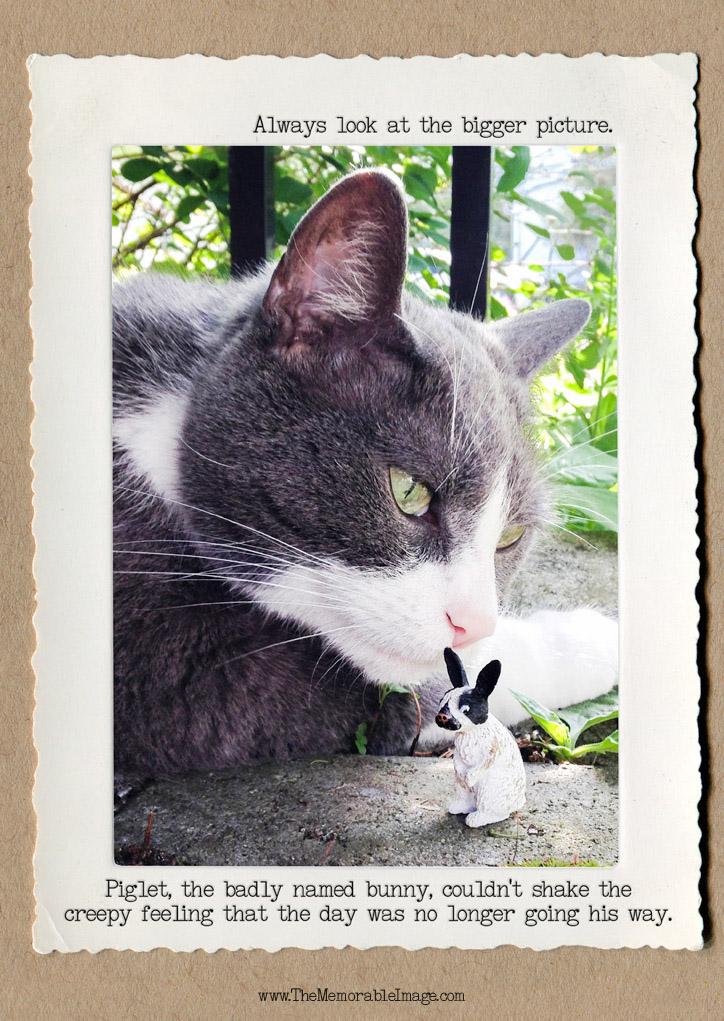 Piglet_Cat_C_W.jpg