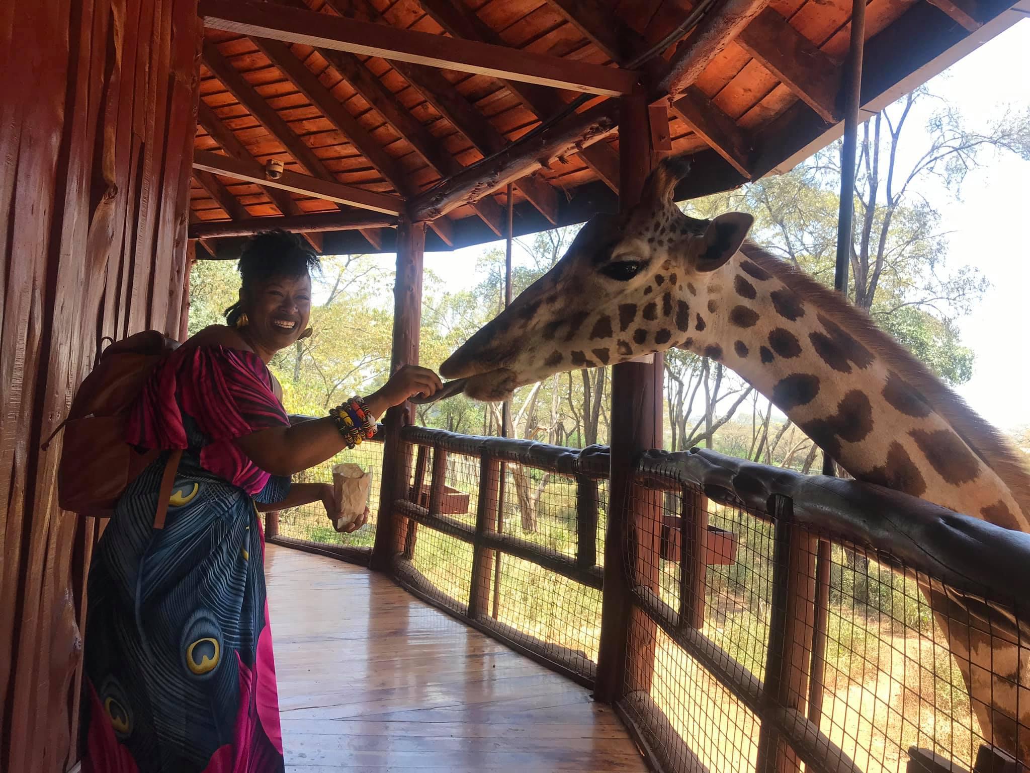 feeding Salma again at Giraffe Center