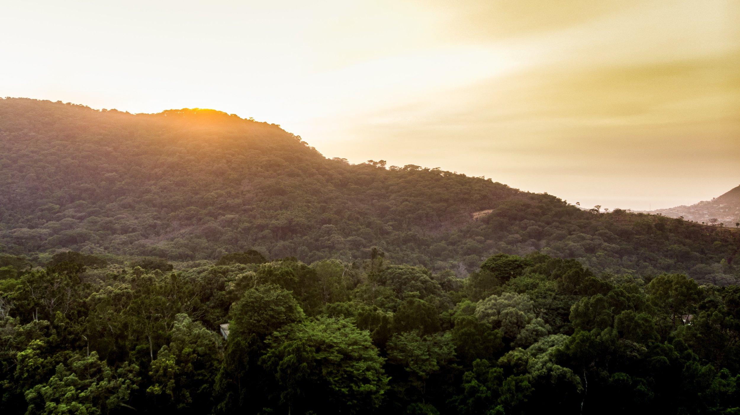 Sierraleone-vickieremoe-environment-rainforest-conservation-photos-radwanskeiky4.JPG