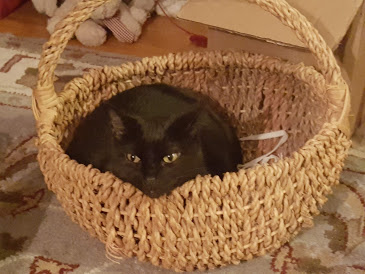 Jovi took over my basket ... not mine anymore.