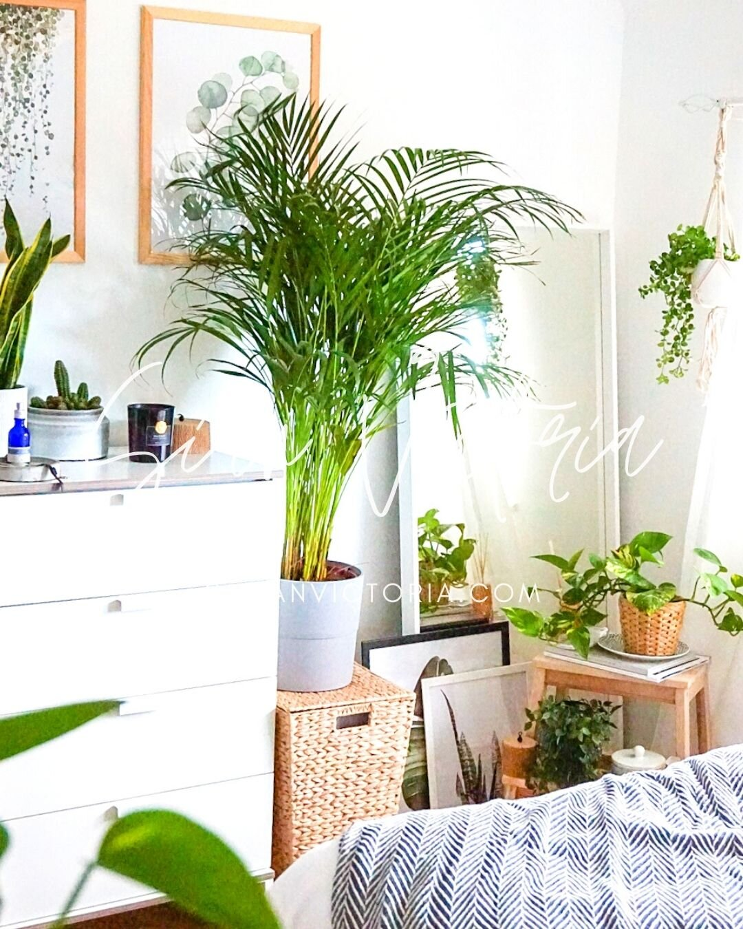 5 Best House Plants To Grow Fast Easy To Care For Sian Victoria