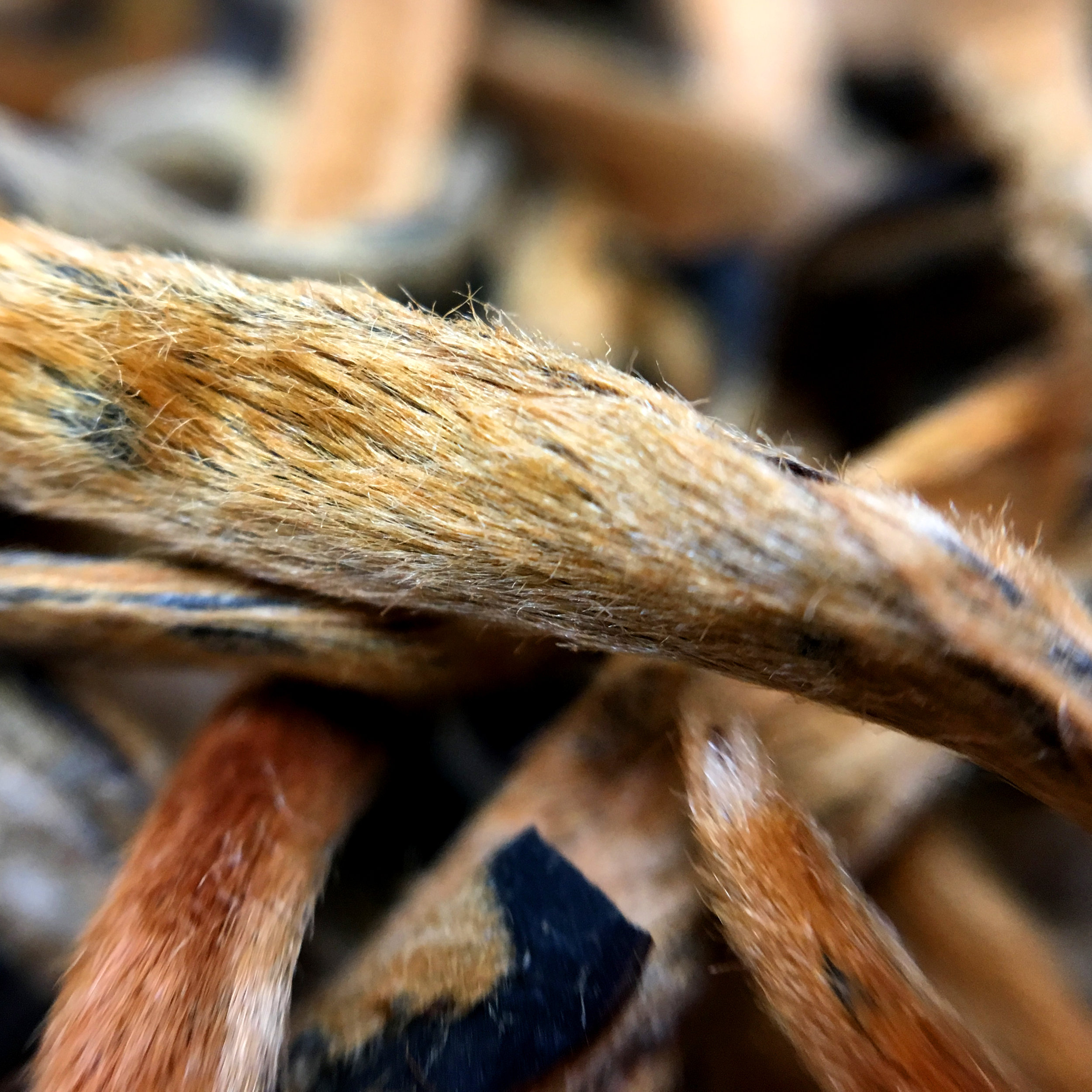 yunnan-golden-needles-black-tea-china-macro.JPG