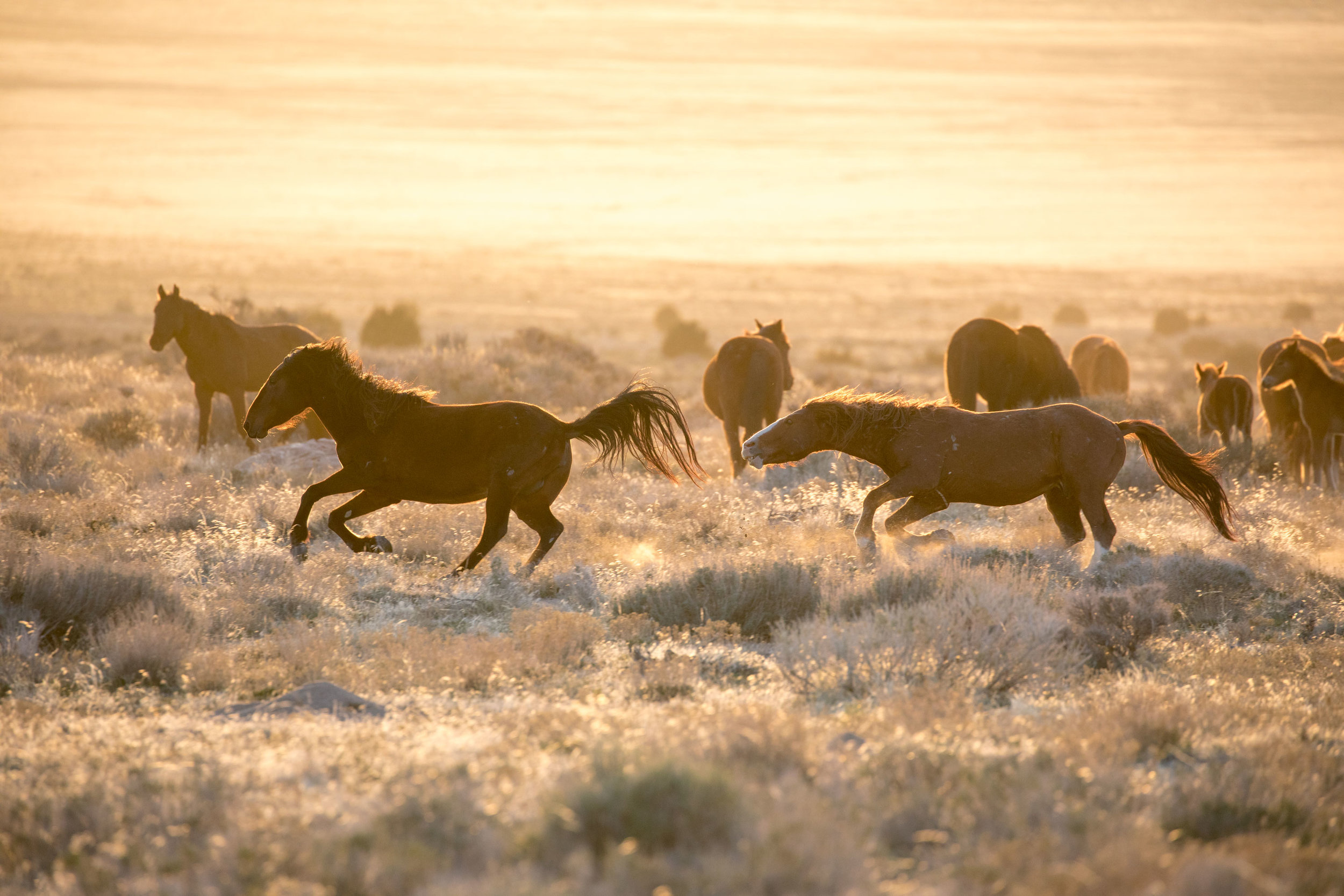 Chaos by the watering hole during sunset.