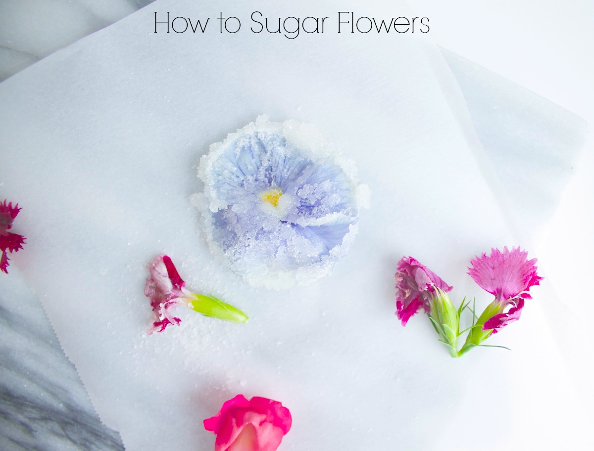 how to sugar flowers