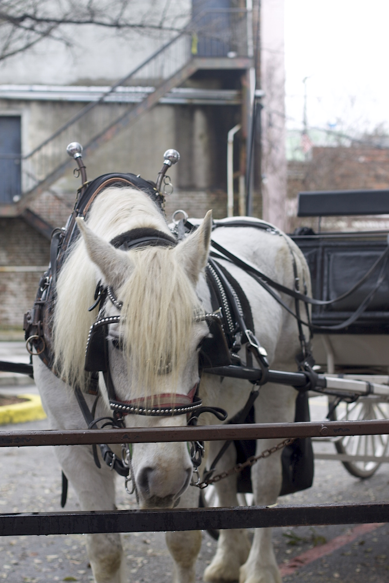 carriage-tours-in-Charleston.jpg