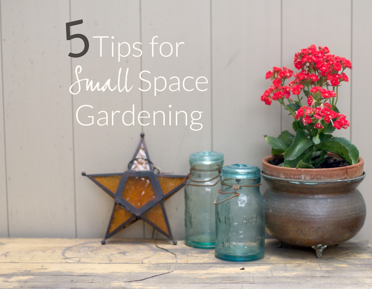 5-Tips-for-Small-Space-Gardening.jpg
