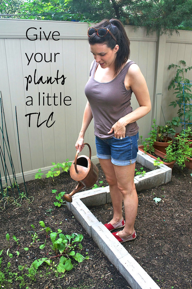 TLC-for-plants.jpg