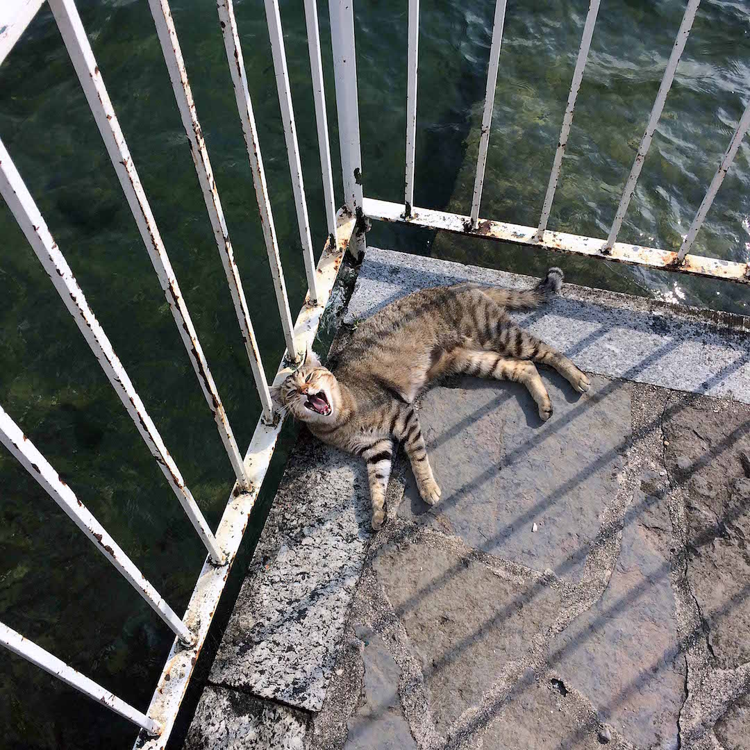 Cats-in-Lake-Como.jpg