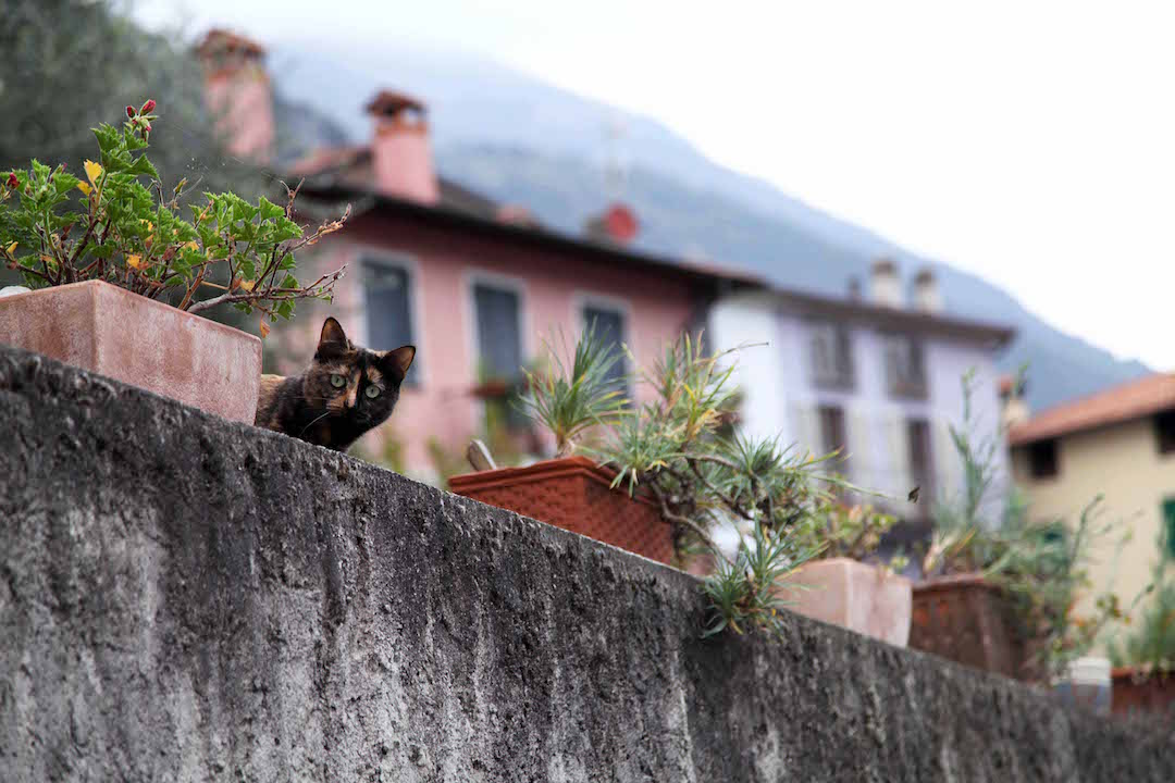 cats-spotted-around-Lake-Como.jpg