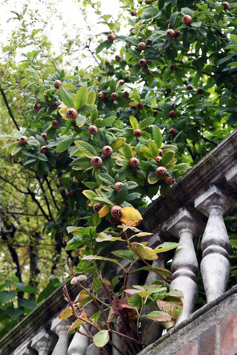 fruit-trees-in-Torino.jpg