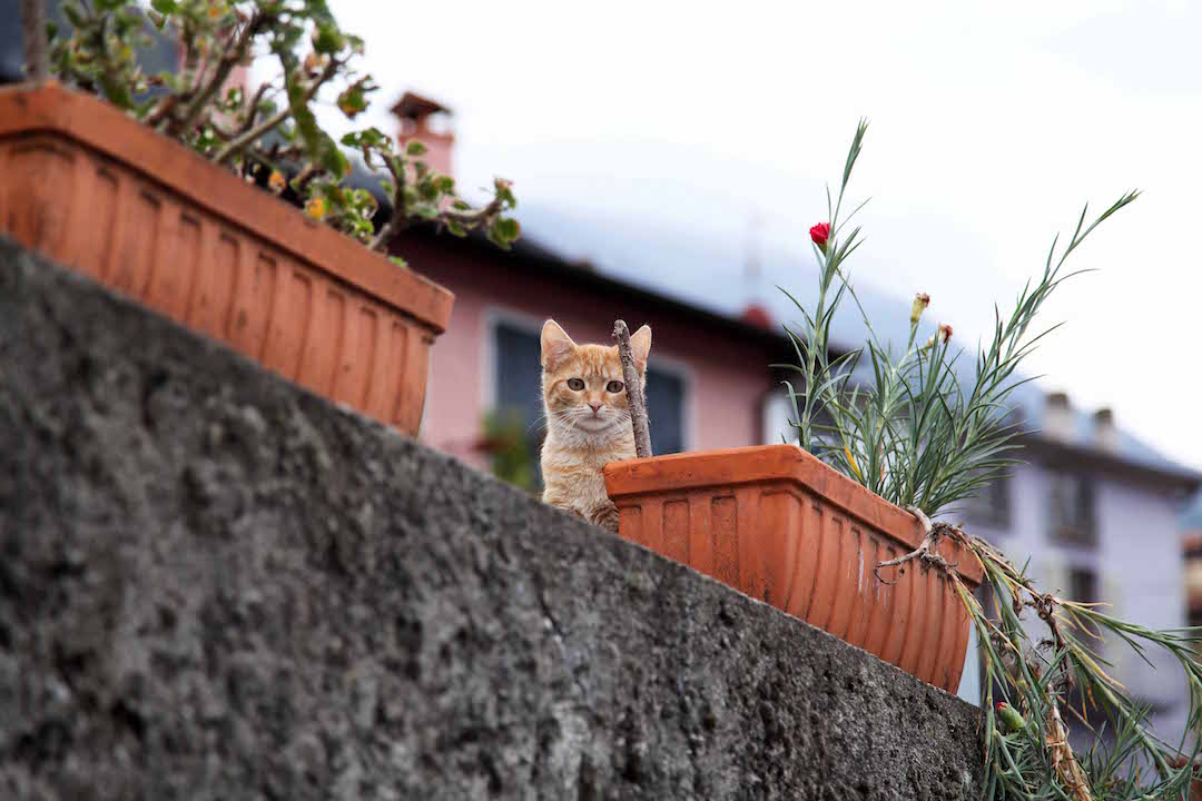 kitten-in-Lake-Como.jpg
