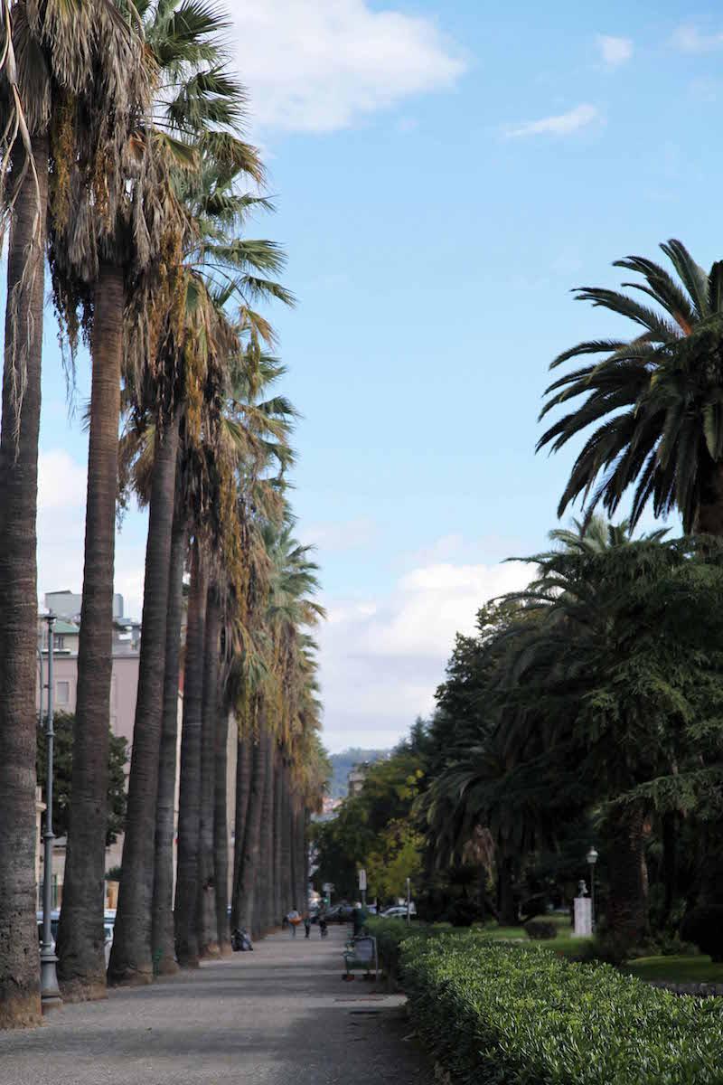 palm-trees-in-la-spezia.jpg