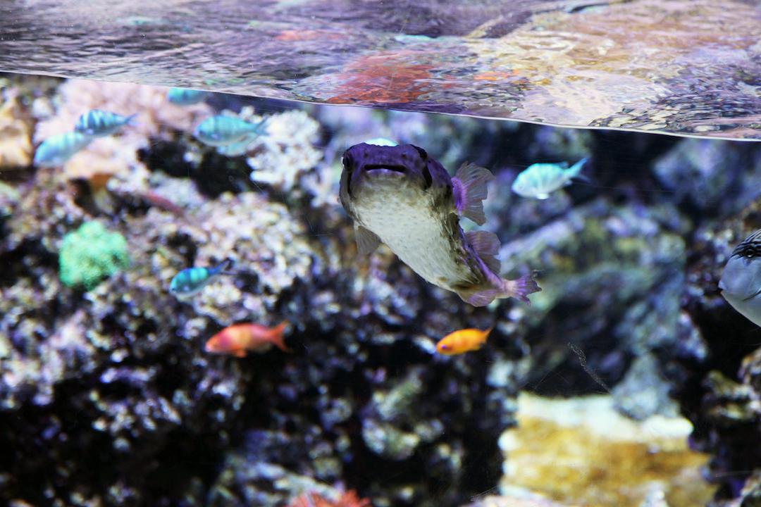 Milan-aquarium.jpg