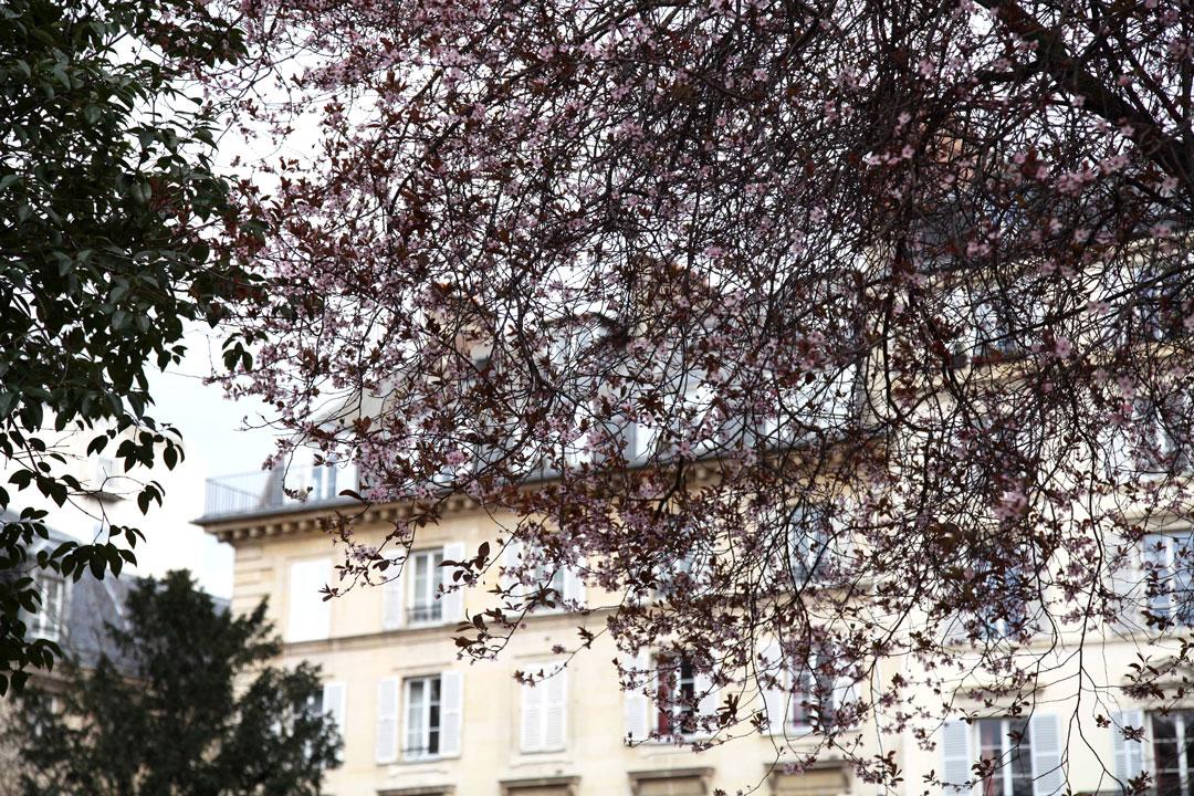 spring-flowers-in-Paris.jpg