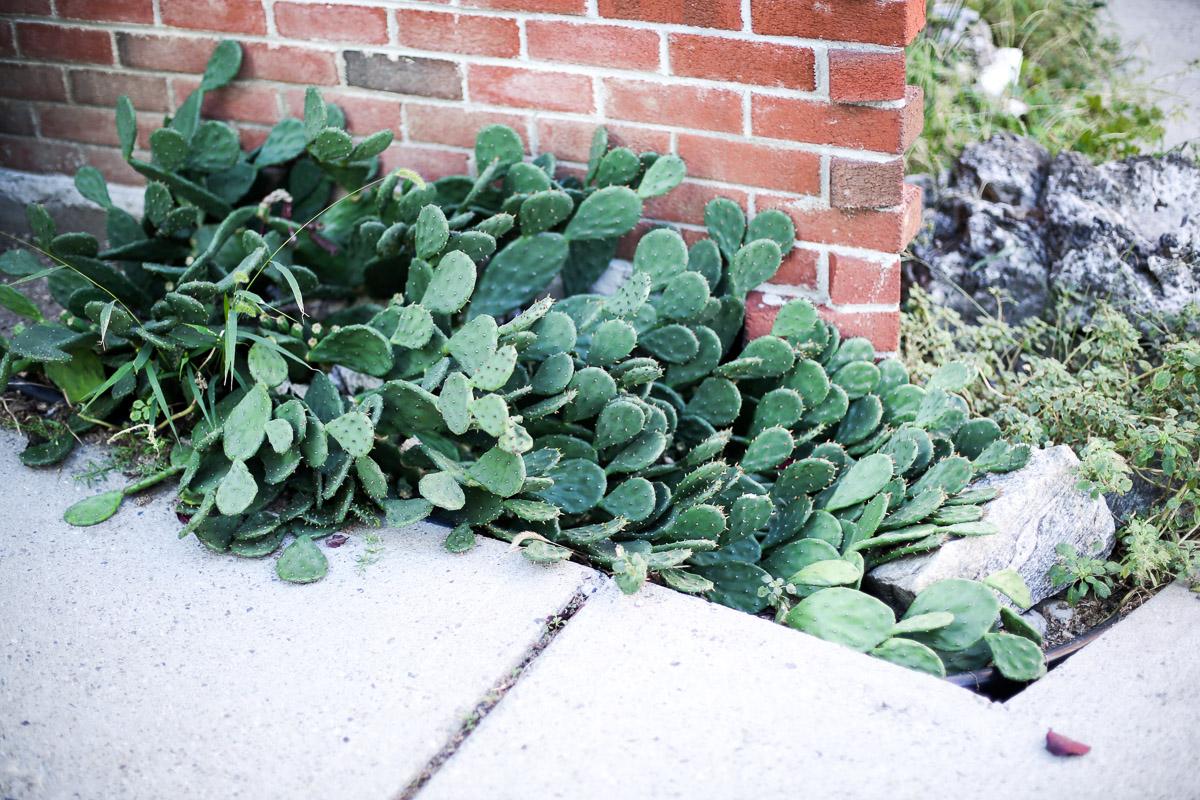 cactus-plant.jpg