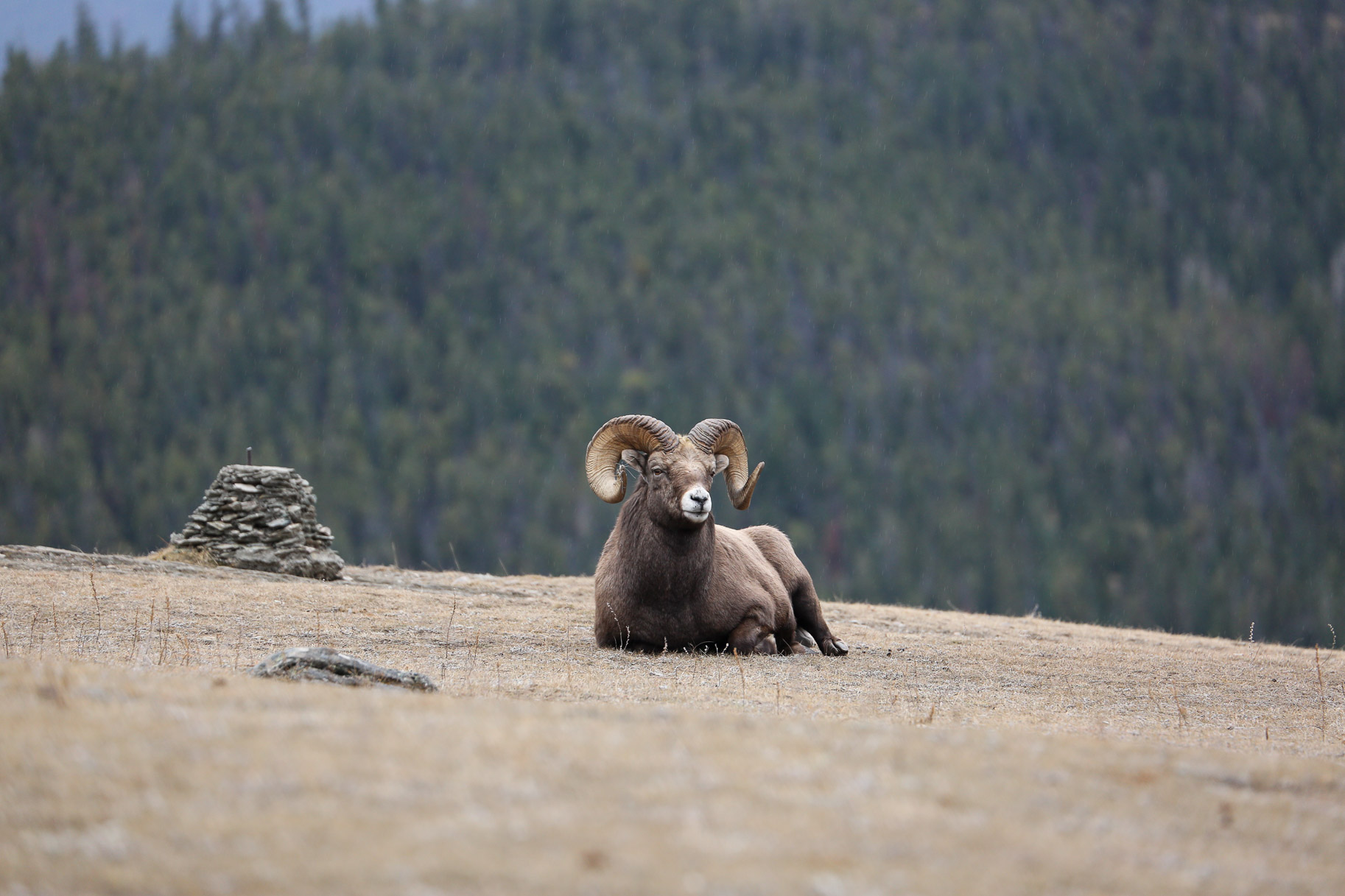 Jasper-Canada27.jpg