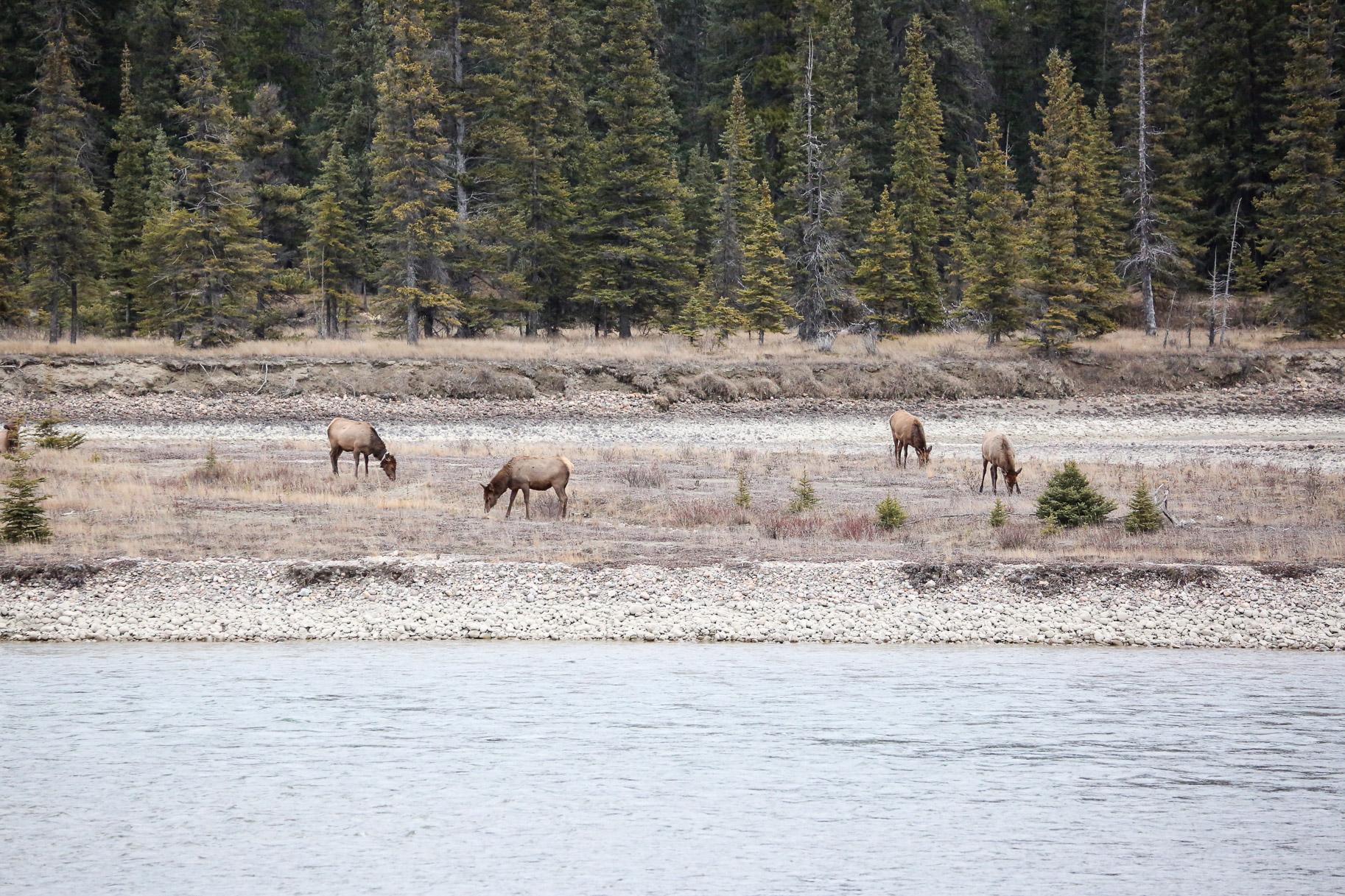 Jasper-Canada36.jpg