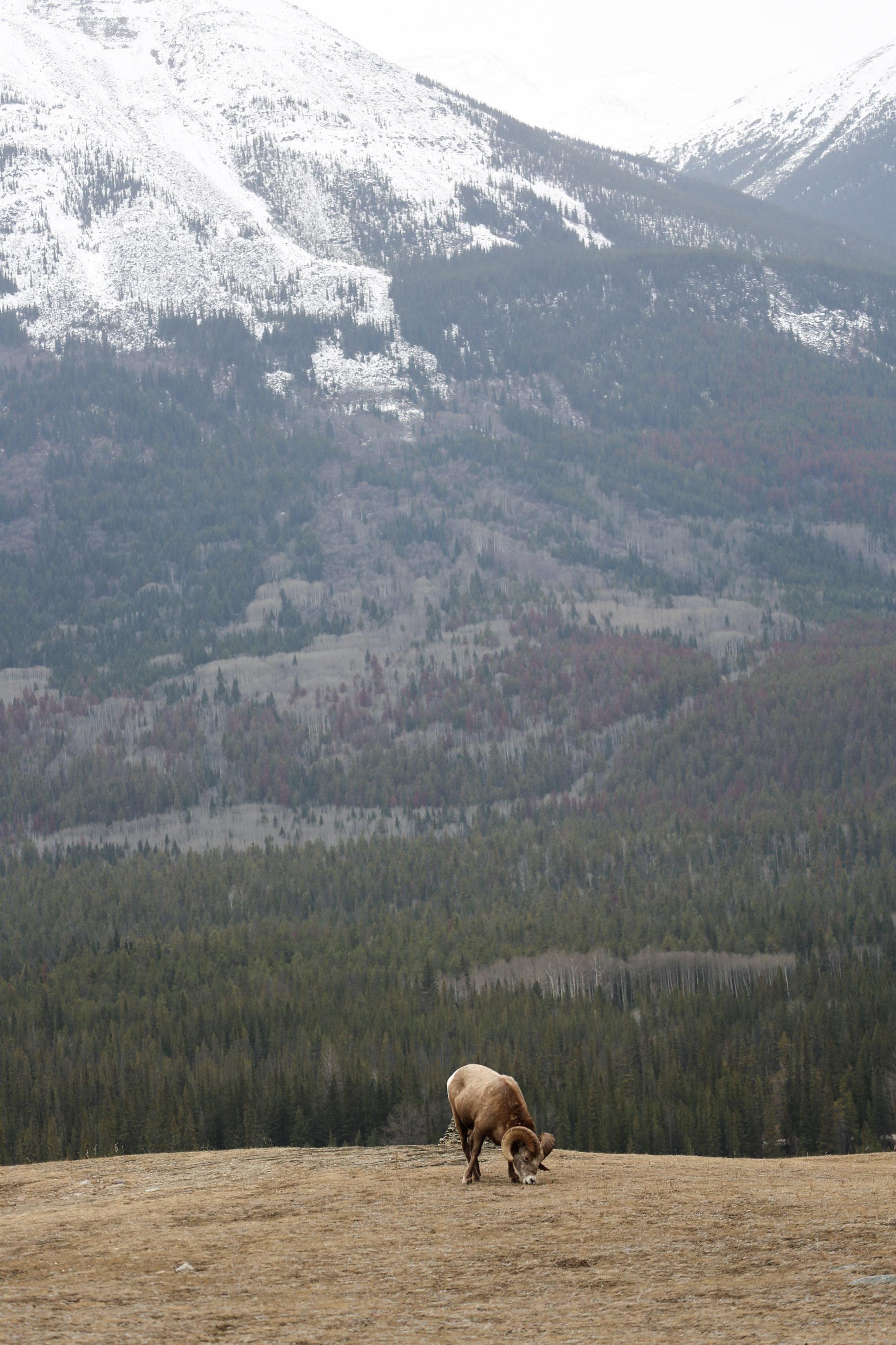 Jasper-Canada4.jpg