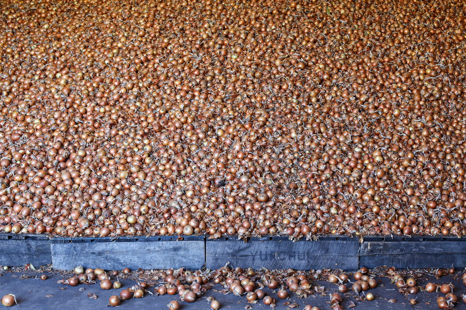 Minkus-Family-Onion-Farm1.jpg