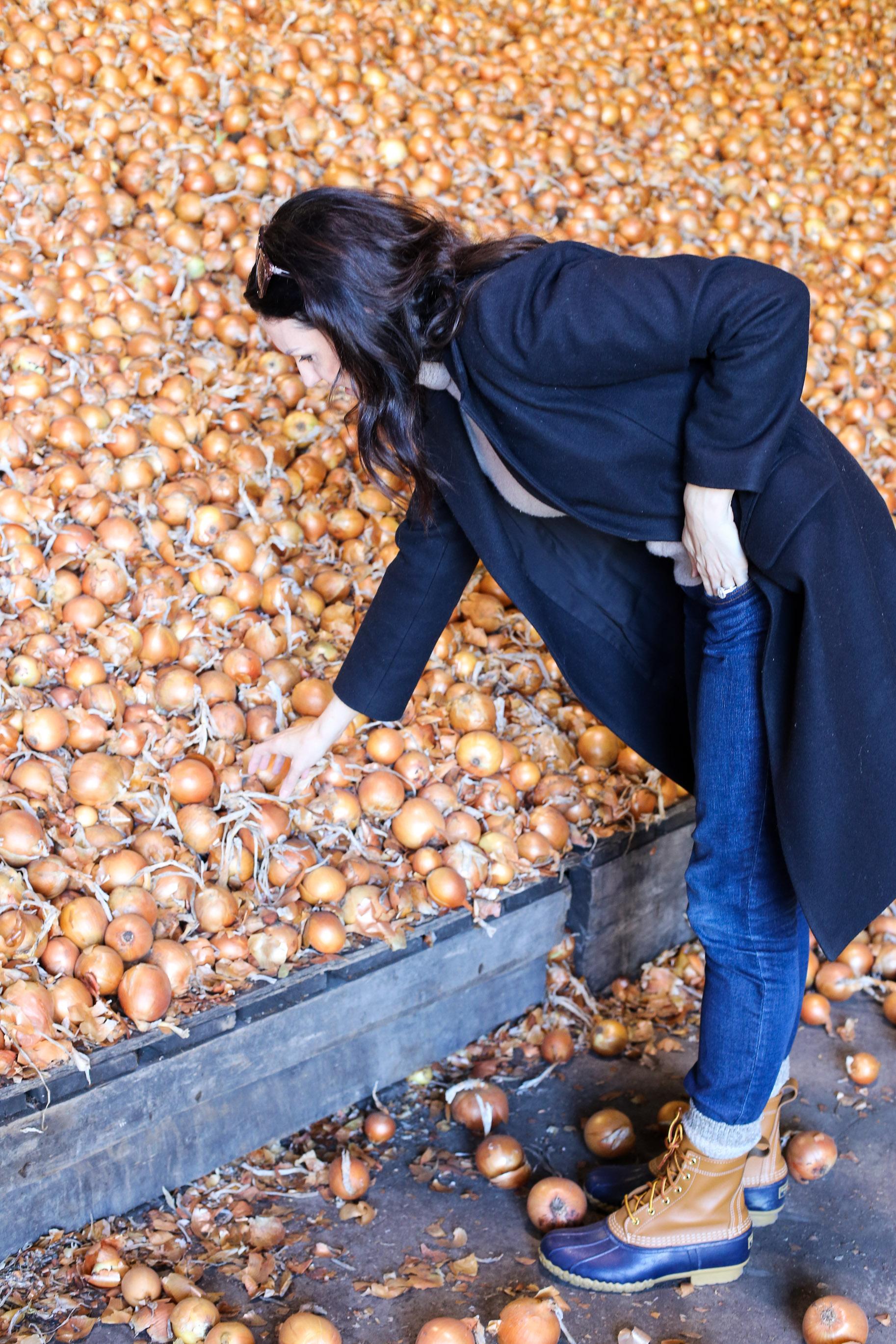 Minkus-Family-Onion-Farm15.jpg