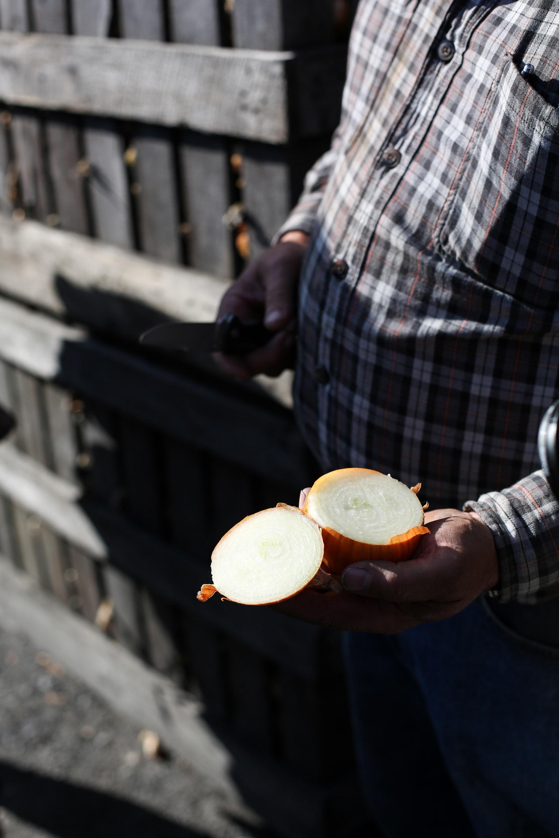 Minkus-Family-Onion-Farm23.jpg