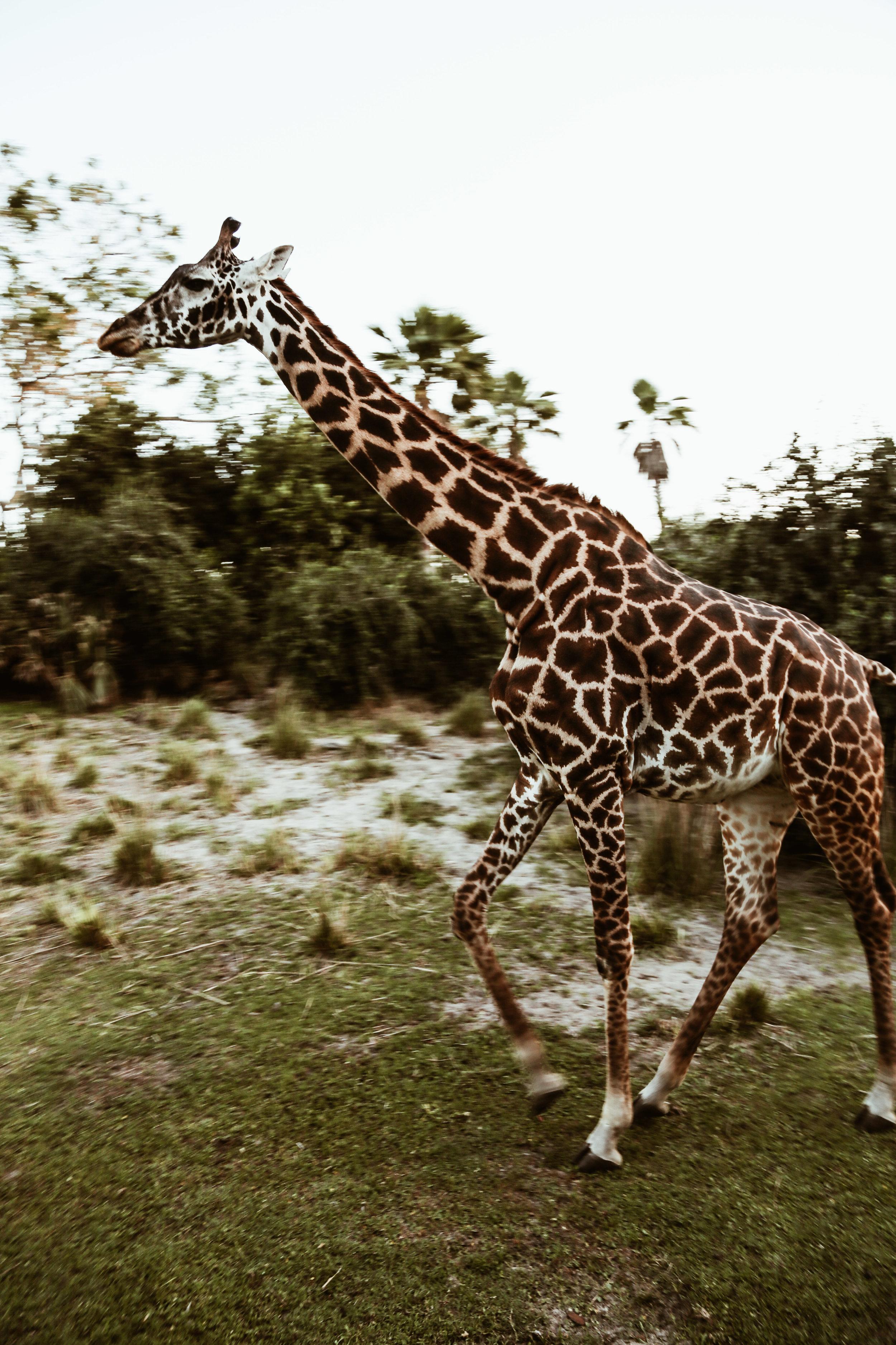 animal kingdom-32.jpg